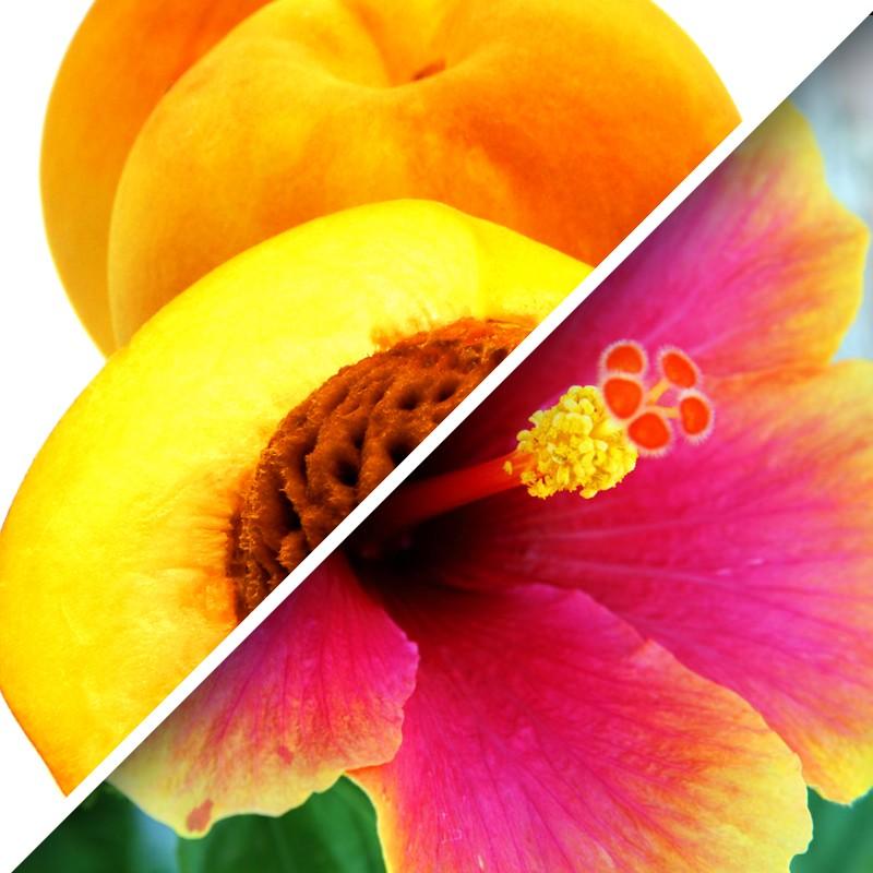 Peach Hibiscus Tea Coffee City Usa